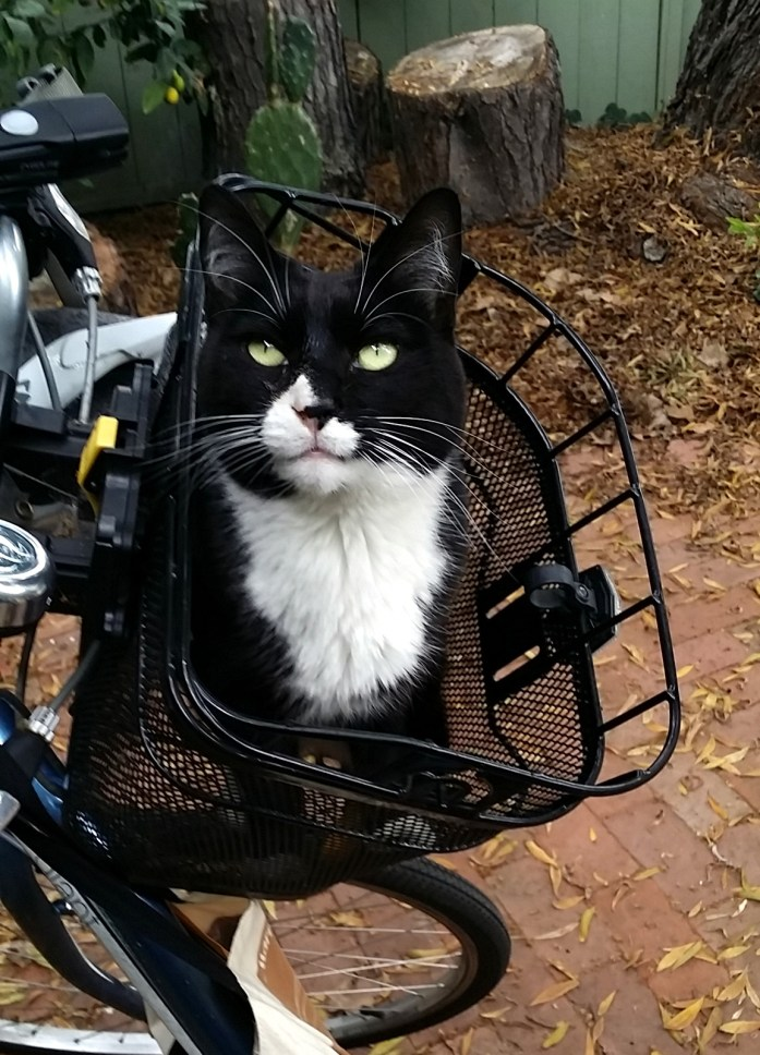 Bootsy in bike