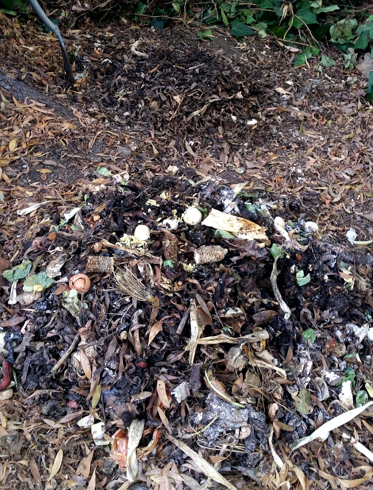 compost for the lazy throw it on the ground u2013 the zero waste chef