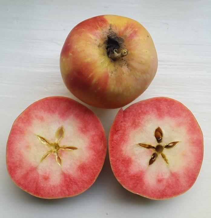 Pink Pearl apples