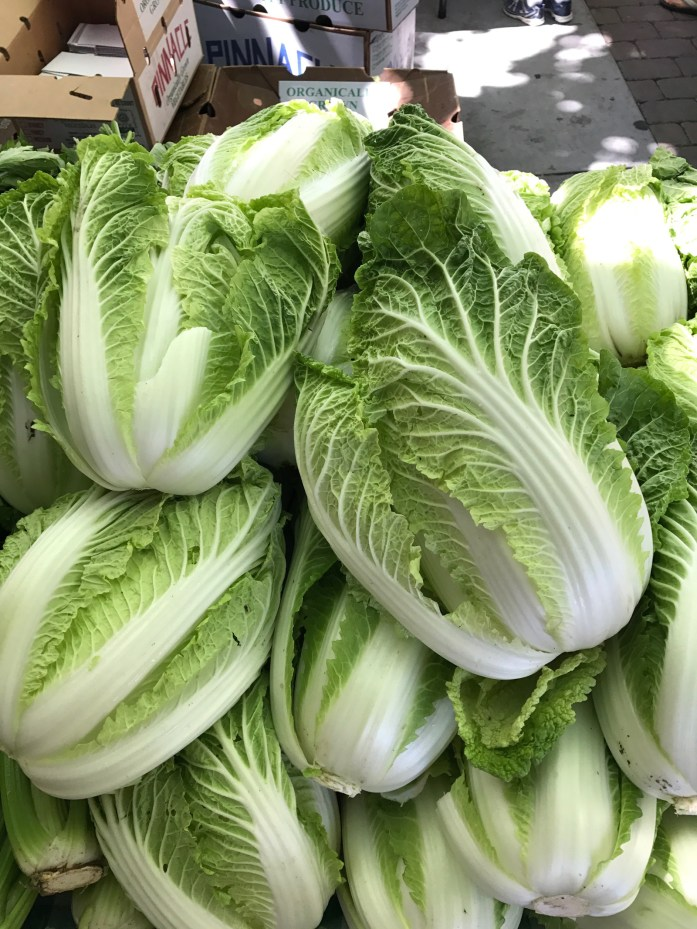 Napa cabbages for kimchi