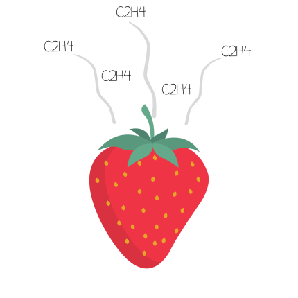 strawberries produce ethylene