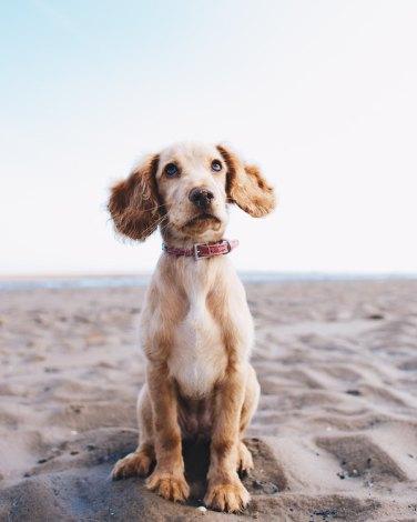 Going Zero Waste With Pets - Zero Waste Nest