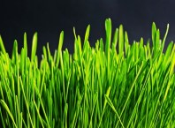 How to Use Synthetic Grass in Interior Design