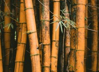 Bamboo vs Other Wood in Your Kitchen What Is the Best Choice