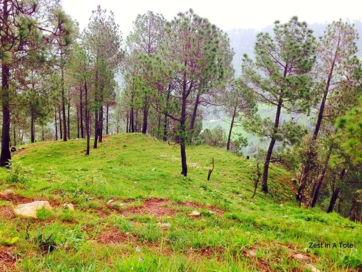 Green all around: on a short trek near Faraway Renz
