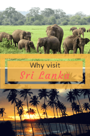 For a small country, Sri Lanka offers a very diverse set of experiences. Visit this compact beautiful country for varied wildlife, fine sandy beaches, lush tea plantations, Buddhist monuments and colonial towns. #srilanka #thingstoseeinsrilanka #placestovisitinsrilanka