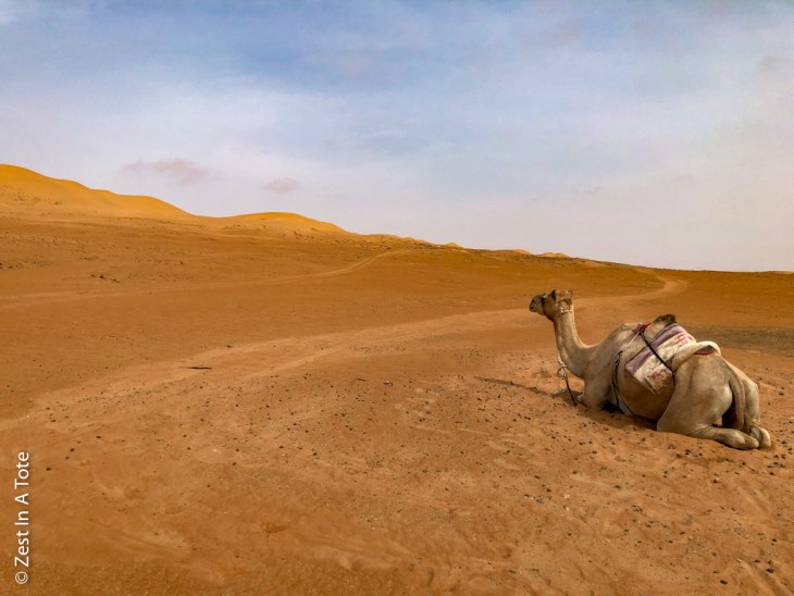 Wahiba-Sands-camel-resting