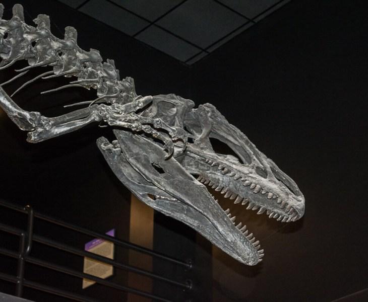 Aathal Dino