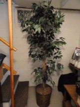 Artificial Home Decor Ficus Tree Plant 7' Ratan Vase Excellent Cond Preowned