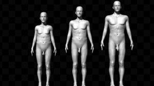 As voluntárias avaliaram 343 figuras masculinas diferentes, que variavam em sua altura, tamanho do pênis e proporção entre ombros e cintura((PNAS/Reprodução)/VEJA)
