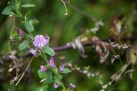 Fleurs Montagnes35