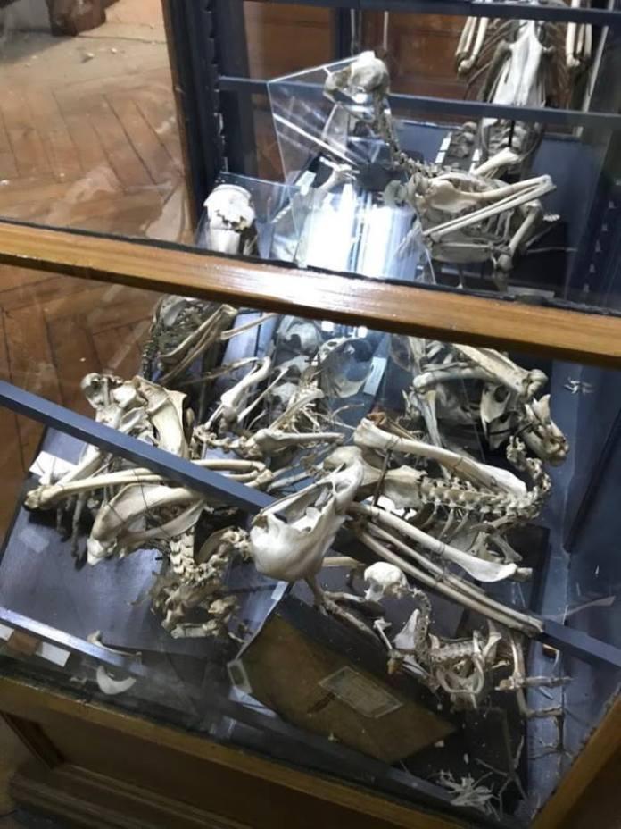 Zatvoren je Hrvatski prirodoslovni muzej, treba osigurati 600 m2 za hitnu evakuaciju građe
