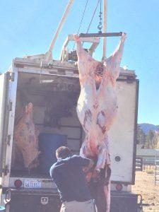 beef butchering