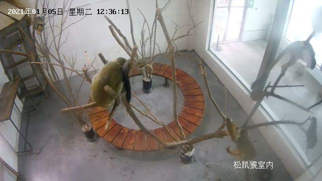 松鼠猴-直播-重慶樂和樂都景區