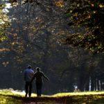 Прогулянки в лісі лікують хворе серце та легені