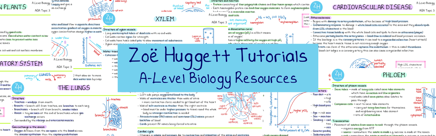 Free A-Level biology revision notes pdf download exchange and transport aqa ocr