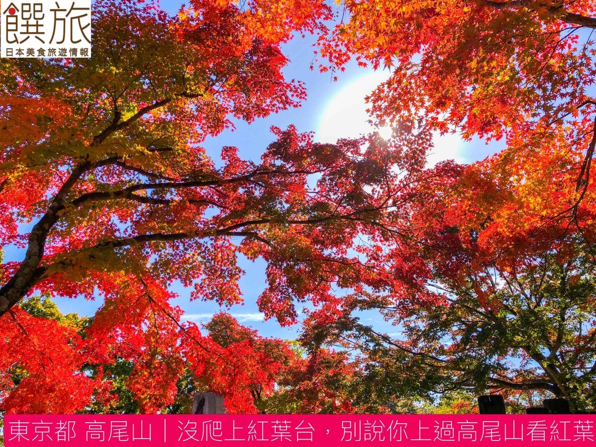 東京都高尾山 沒爬上紅葉台別說你上過高尾山看紅葉、富士山、櫻花