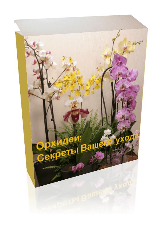Орхидеи Секреты ухода