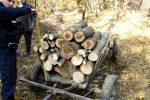 Dosar penal pentru tăiere ilegală de arbori
