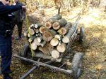 Dosar penal pentru tăiere ilegală de arbori și furt de material lemnos