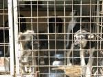 Padocul tecucean a ajuns în vizorul Federaţiei pentru Protecţia Animalelor