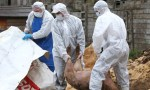 DSVSA avertizează că pesta porcină se extinde în judeţul Galaţi