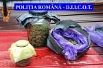 Flagrant urmat de opt percheziţii. Peste trei kilograme de cannabis confiscate