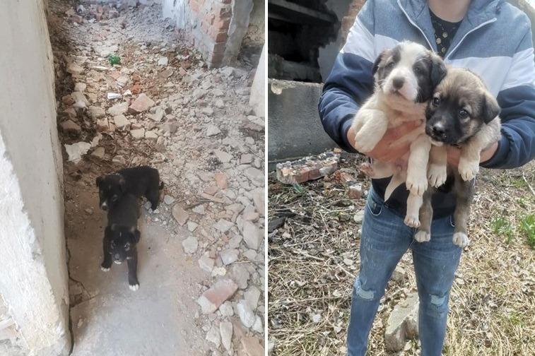 Povestea câinilor abandonaţi din Tecuci