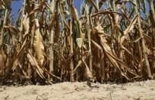 Aproximativ 9.800 de fermieri au primit ajutorul de minimis