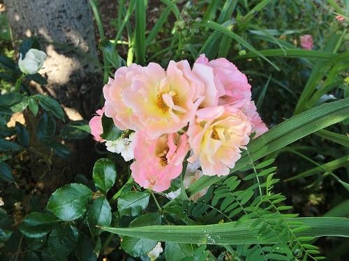 Rosen sind permanent im Flow