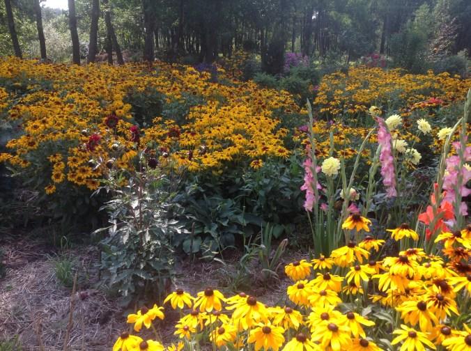 img_0921 Ogród w lesie - Sumin