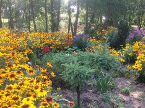 img_0923 Ogród wlesie - Sumin