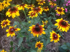 img_0924 Ogród wlesie - Sumin