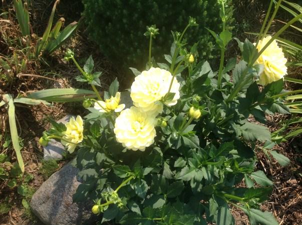 img_0938 Ogród wlesie - Sumin