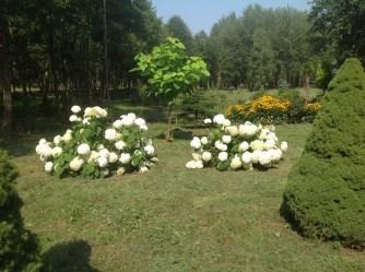 img_0955 Ogród w lesie - Sumin