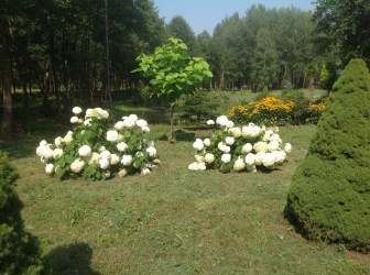img_0955 Ogród w lesie. Sumin