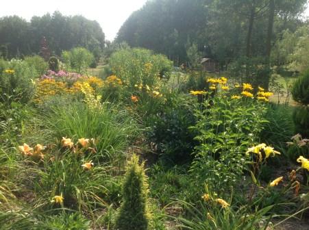 img_0996 Ogród wlesie - Sumin