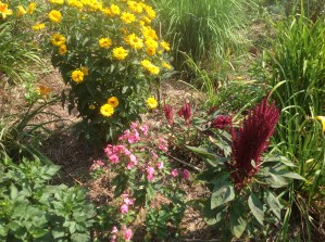 img_0997 Ogród wlesie - Sumin