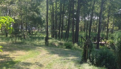 img_1043 Ogród w lesie - Sumin