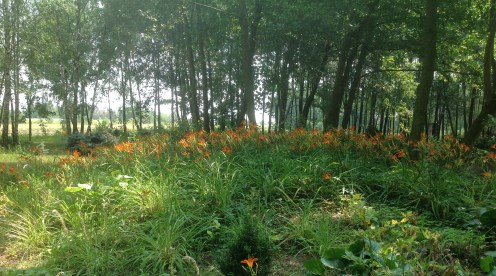 img_1082 Ogród w lesie - Sumin