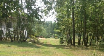 img_1083 Ogród wlesie - Sumin