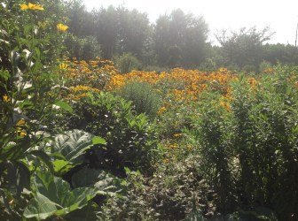 img_1092 Ogród w lesie - Sumin