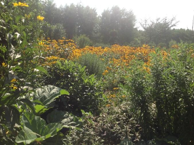 img_1092 Ogród w lesie. Sumin