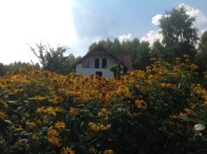 img_1094 Ogród wlesie - Sumin