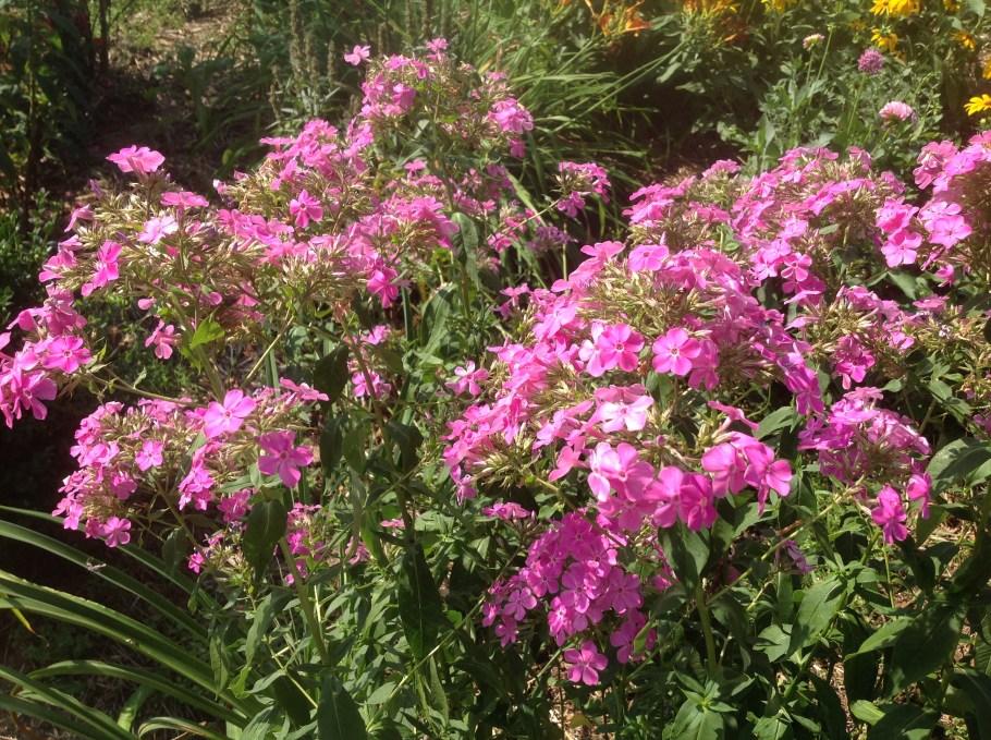 img_1096 Pierwsze kwiaty wiosny