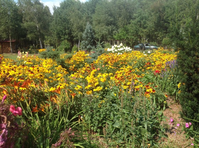 img_1097 Ogród w lesie - Sumin
