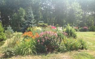 img_1105 Ogród wlesie - Sumin