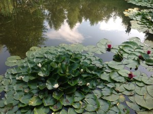 img_1407 Ogród wlesie - Sumin