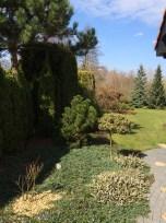 img_6275 Klasyka ogrodu. Classic garden.