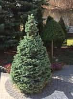 img_6278 Klasyka ogrodu. Classic garden.